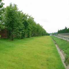 Придорожная трава, семена для посадки Воронеж. Недорогие семена придорожной травы в посадочных смесях